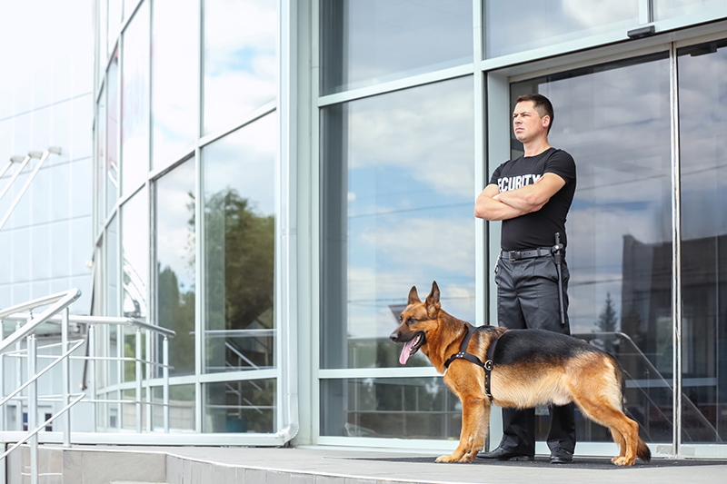 Security Guard Cv in Kent United Kingdom
